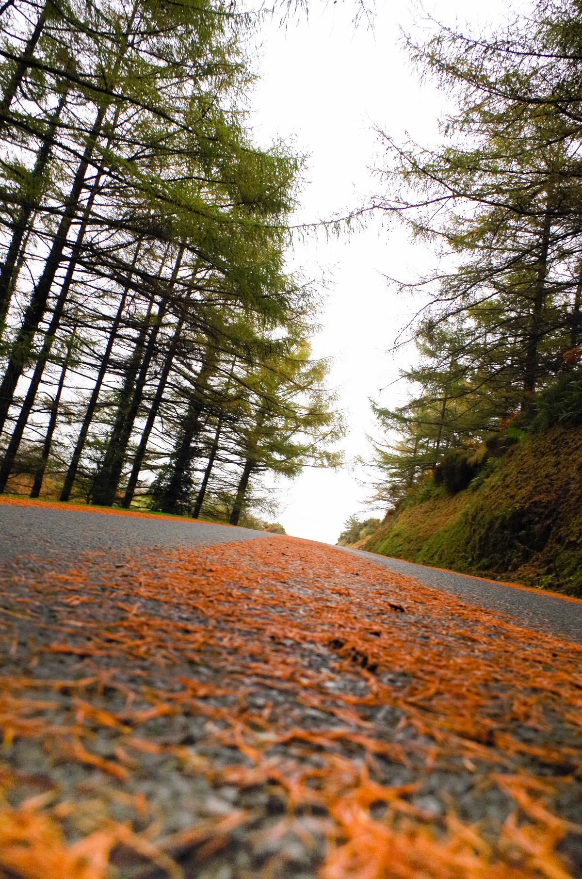Carretera en otoño. Valle del Baztán